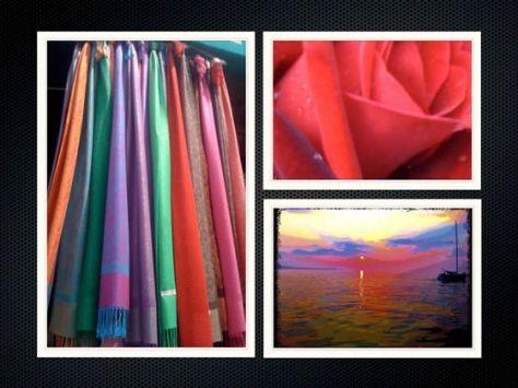 Portfolio collection- Inspiration Reds